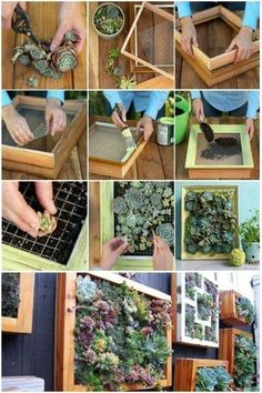 Succulents are a great way to add freshness to any space. f you're looking to add some color or interest to a wall in your home, a succulent wall garden might be just what you need. Succulent Wall Diy, Vertical Succulent Gardens, Vertical Garden Wall, Succulent Gardening, Succulent Terrarium, Succulents Garden, Succulent Outdoor, Vertical Planter, House Plants Decor