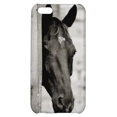Everything Horse and Pony: Curious Black Horse iPhone 5C Case