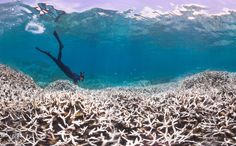 Coral bleaching is a big damn deal and the consequences are scary.