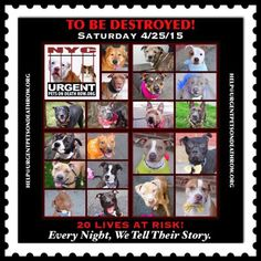 TO BE DESTROYED - 04/25/15 - http://nycdogs.urgentpodr.org/to-be-destroyed-4915/ …
