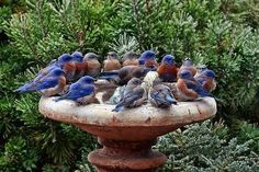 The Blue Bird Gang