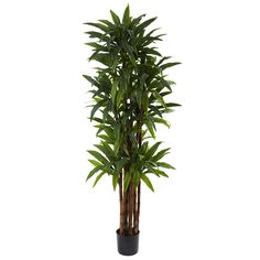 Nearly Natural 5403 Dracaena Tree, 6.5-Feet, Green >>> Want to know more, click on the image.