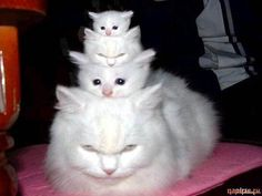 MMMM A stack of kitties      - maybe I should go to the vet... I'll tell her I did it for her!