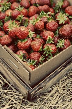 strawberry detail shot