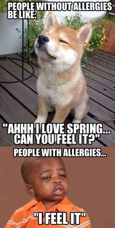 people without allergies vs people with allergies meme Funny Shit, Haha Funny, Funny Cute, Funny Jokes, Funny Stuff, 9gag Funny, Funny Laugh, Funny Things, That's Hilarious