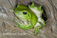 @Susan Morris MacQuarrie frogs for you YAY I love these guys!