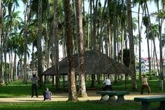 Just some folks doing Tai Chi in the palm park during the day. During The Day, Tai Chi, South America, Palm, Most Beautiful, Plants, Flora, Plant, Hand Prints