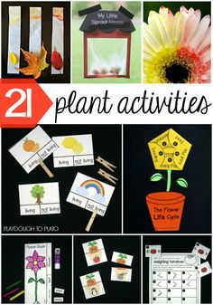 21 Must-Try Plant Life Cycle Activities for Kids! Make a sprout house, try your hand at leaf chromatography, turn a flower not one but TWO colors and more! So many ideas for a plant unit or spring theme.
