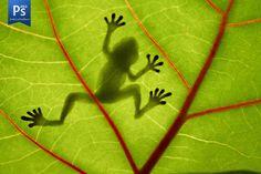 Tattoo idea | Underside of frog. Or just on leaf.