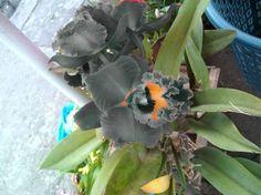 orquidea gris