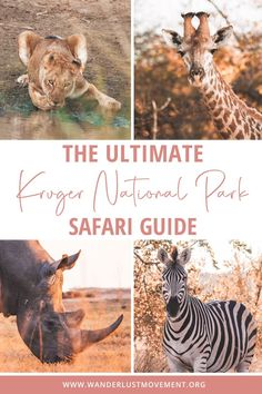 Kruger National Park is the best safari destination in South Africa! Here's a detailed guide (from a local) that explains everything from booking a guided safari, going on self-drives, staying inside the park and which camps are the best to spot the Big 5!