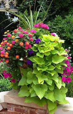 Beautiful Container Garden with spikes pink geranium lantana violet and magenta petunias and cascading sweet potato vine. The post Beautiful Container Garden with spikes pink geranium lantana violet and magen appeared first on Decoration. Outdoor Flowers, Outdoor Plants, Outdoor Decor, Potted Plants Patio, Flowering Plants, Outdoor Ideas, Backyard Ideas, House Plants, Outdoor Spaces