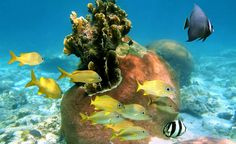 The Bahamas are a great place to explore underwater, with colorful tropical fish and massive coral. (From: PHOTO: 10 Most Romantic Islands in the World! Vacation Trips, Vacation Spots, Beach Rain, Diving School, Underwater Caves, Most Romantic, Tropical Fish, Beautiful Islands, Amazing Destinations