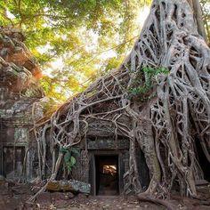 Comparateur de voyages http://www.hotels-live.com : Ici la nature reprend ses droits #TaProhm #Angkor #Cambodge #voyageprivefrance #trip #tourisme #upgrade #travel #voyage #voyageprive #holiday #discover #seetheworld #instagram #instatravel #instavoyage #travelling #vacation #lovetravel #beautiful #evasion #nature Hotels-live.com via https://www.instagram.com/p/BEaxn5HhMrC/ #Flickr via Hotels-live.com…