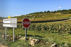 Now is the time to visit Burgundy.Hire a guide to take you on vineyard drives and walks, and to taste Burgundy wines at small family-owned wineries. Burgundy Wine, Wineries, Wine Country, Walks, Vineyard, Photography, Hiking, Vine Yard, Fotografie