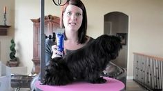 how to groom a shih tzu at home - Yahoo Video Search Results