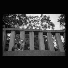 https://flic.kr/p/tvPUER | Chee May 2015  #cat #smallcats #blackandwhitephotography