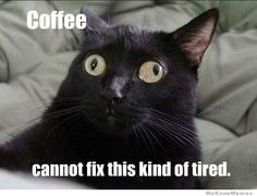 Black cat with funny eyes squint i see what you did there meme lol cat macro Funny Cat Memes, Funny Cute, Funny Stuff, Funny Things, Cat Stuff, Funny Laugh, Funny Humor, Crazy Cat Lady, Animals