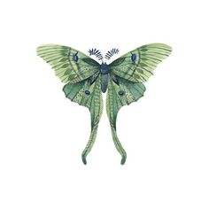 Watercolor Luna Moth tattoo Pattern Tattoo Temporary Tattoo wrist ankle body sticker fake tattoo ($2.95) found on Polyvore featuring women's fashion, accessories and body art #removetattoos