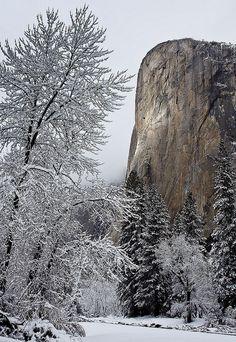 Winter light on El Capitan, Yosemite National Park by Robin Black Photography