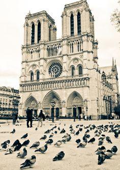 Notre Dame pigeons by Joanna Lemanska, via 500px