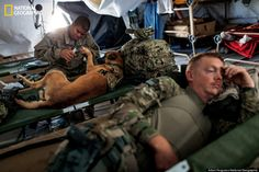 War Dogs. NatGeo/HuffPost