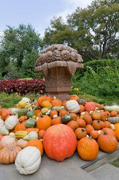 Dallas Arboretum, Autumn at the Arboretum, Fall, Garden, Pumpkins Dallas Arboretum, Bold Prints, Simple Elegance, Autumn Leaves, Pumpkins, Vivid Colors, Fall Decor, Texas, Garden