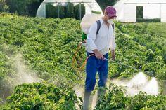 Dotychczas szkodzących uprawom owadów, pozbywano się dzięki spryskiwaniu roślin chemikaliami
