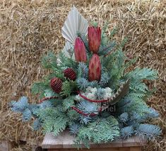 Allerheiligen - Gärtnerei Rothermel Christmas Wreaths, November, Holiday Decor, Plants, Home Decor, Flower Arrangements, Urn, Cactus, Diy