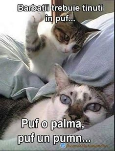 Jr takes up face bongos cat hug, kitty cats, kittens, funny animal memes Funny Animal Pictures, Funny Animals, Cute Animals, Funny Photos, Baby Animals, Funny Images, Cartoon Images, Bing Images, Cute Kittens