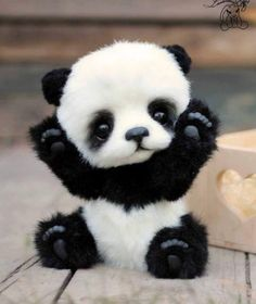 Picture result for pandas bebes - Small animals - result # f . - Picture result for pandas bebes – Small animals – result # for … # bebes smal - Baby Animals Super Cute, Cute Baby Dogs, Cute Dogs And Puppies, Cute Little Animals, Cute Funny Animals, Cute Cats, Cute Panda Baby, Cutest Animals, Small Animals