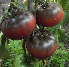 Black Krim tomato.  Hands down my favorite variety.  Great rich taste  GCB