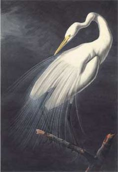 an analysis of a great love for nature and animals in a white heron by sarah jewett Sarah orne jewett's a white heron was published in 1886  of sylvia herself,  the use of light and dark imagery, and the symbolic meaning of the white heron   though this chase had been so long that the wary animal herself had given an  unusual  i guess she won't be troubled no great with 'em up to the old place.