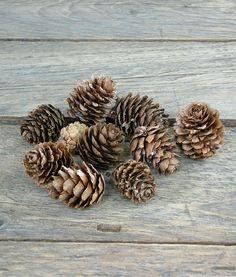 Kicsi toboz száraz termések az őszi és téli dekorációk elengedhetetlen díszítő kellékei