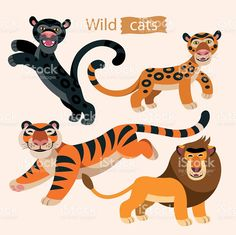 Vector set of wild cats: lion, tiger, panther and jaguar. royalty-free stock vector art
