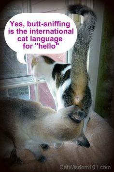 LOL cat-butt sniffing-hello-cat wisdom 101-behavior