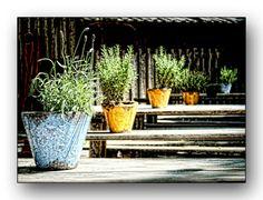 Oldrobel's Fotoreise: beergarden