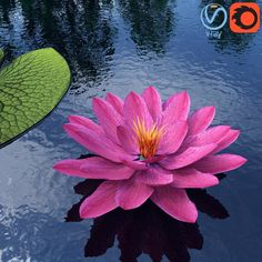 Water Lily - Plant - 0001 3D Model | Download Royalty Free Flower 3D Models - 3D Squirrel