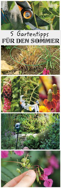 Besondere Pflanzen machen den sommerlichen Garten sehr viel hübscher. Wir geben dir 5 Tipps für die Gartenpflege im Sommer, die du wissen solltest.