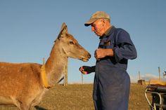 Mountain Red Deer Velvet - Think Barry maybe sharing that apple!