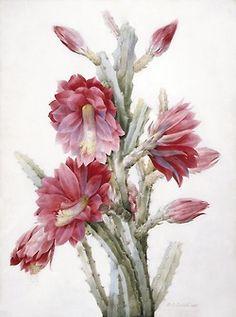 mividayyo:    f-featherbrain:    Pierre-Joseph Redouté,A Flowering Cactus: Heliocereus Speciosus, 1831  (via: LACMA)    mividayyo:  Merci bien Jon :) Tu es très gentil. Mes mieux voeux pour toi. Xoxo. Asun