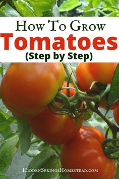 Tomato Gardening For Beginners HOW TO GROW TOMATOES. Learn tips and ideas to grow tomatoes in the garden. Simple tips and ideas to increase your tomato yield in your raised beds or backyard garden.