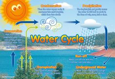 The water cycle free classroom poster from RIC Publications Science Inquiry, Science Resources, Science Experiments Kids, Science For Kids, Science Activities, Science Projects, Science And Nature, School Projects, School Ideas