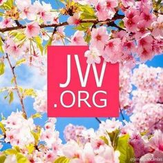 Get answers to all of your Bible questions at this website!