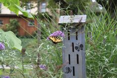 Butterfly house in garden -