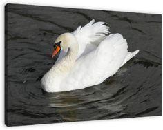 Mooie foto van een zwaan zwemmend op een meertje