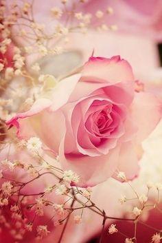 Sonhos coloridos com aromas de rosas se tornam especiais. ~Sol Holme~