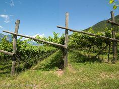 Le nostre vigne - particolare