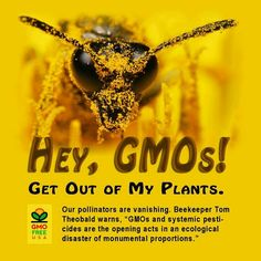 .I have half the bees I had last year