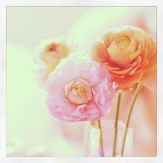 Beautiful arrangement @amandabrumx3-#statigram
